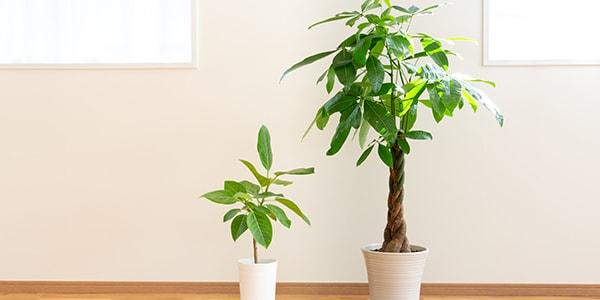 ヨガスタジオ 花の木